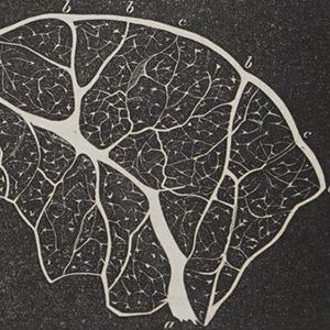 Zellularpathologie Virchow